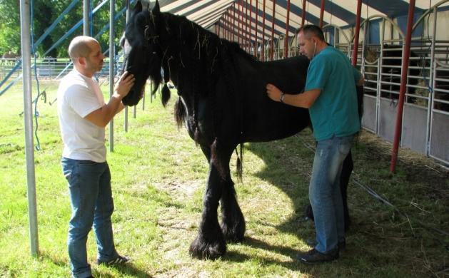 Branimir Novak i konj Gipsy