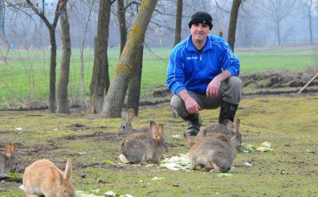 U Dragutinovu društvu, zečevi opušteno grickaju salatu
