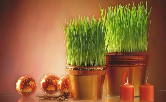 Božićnu pšenicu najbolje je zasijati između 4. i 13. prosinca